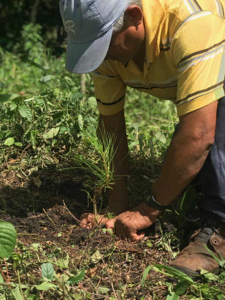 easy travel hosting ecologico riforestazione del guatemala