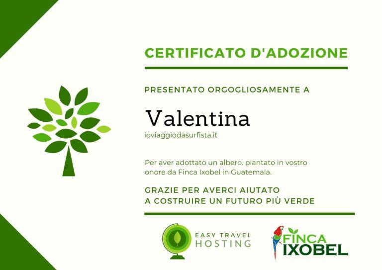 certificato albero io viaggio da surfista easy travel hosting ecologico
