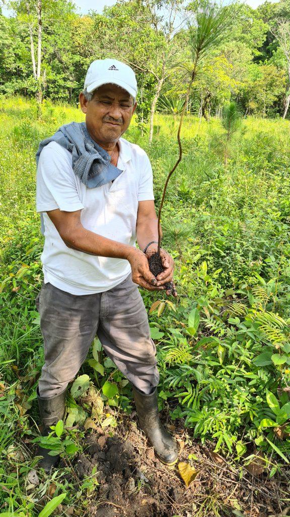 easy travel hosting ecologico piantumazione alberi guatemala