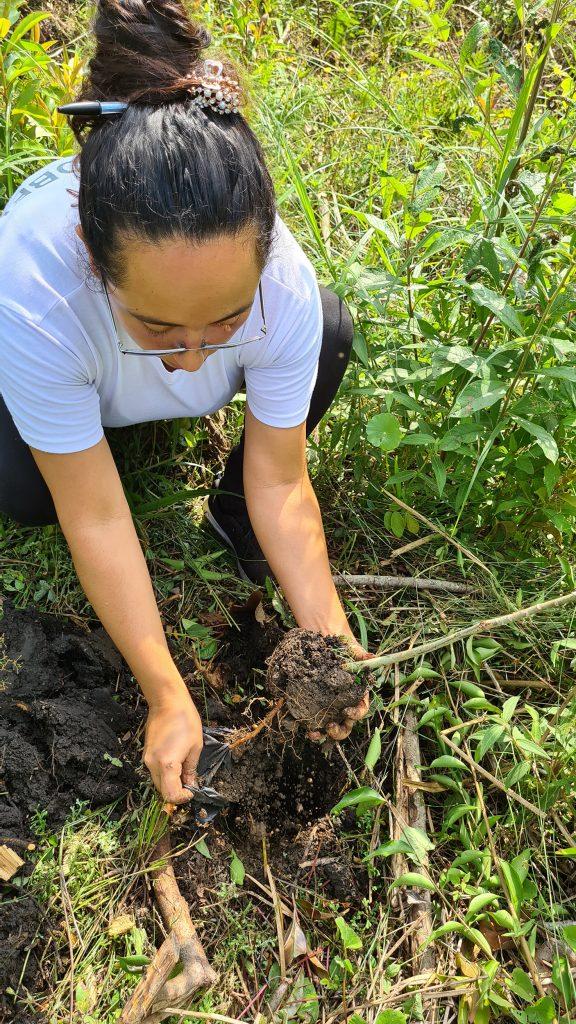 riforestazione in guatemala