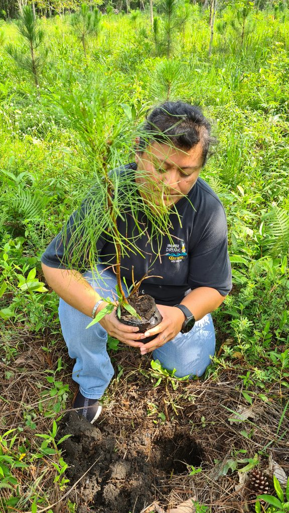 easy-travel-hosting-riforestazione-guatemala-2