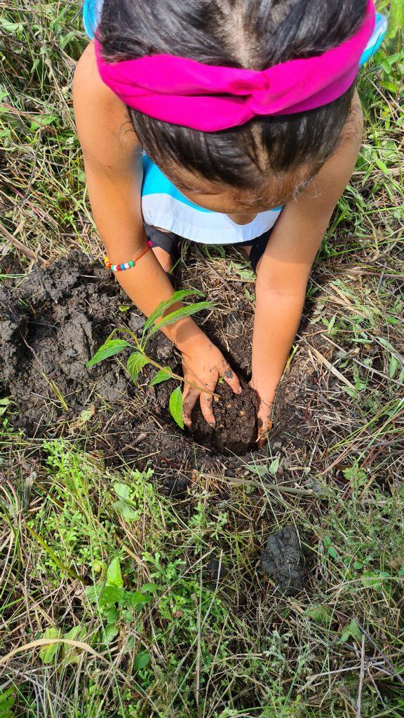 easy-travel-hosting-riforestazione-guatemala-3
